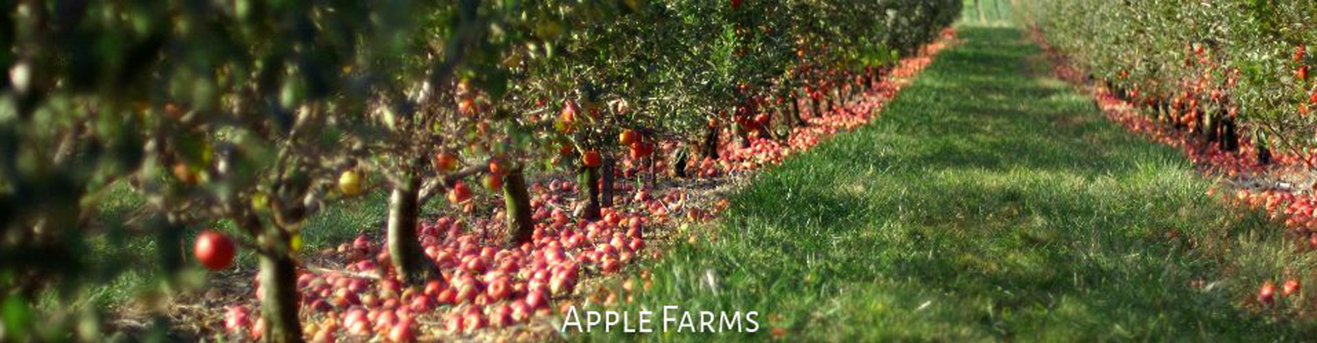 zapplefarms